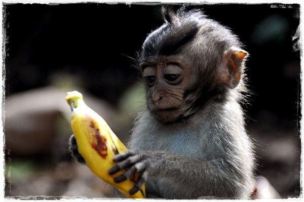 border_baby-eating-banana.jpg